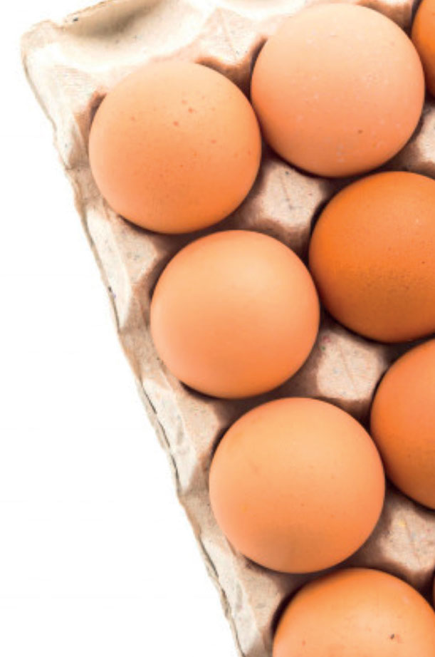 meyer-freiland-eier-kaufen-3