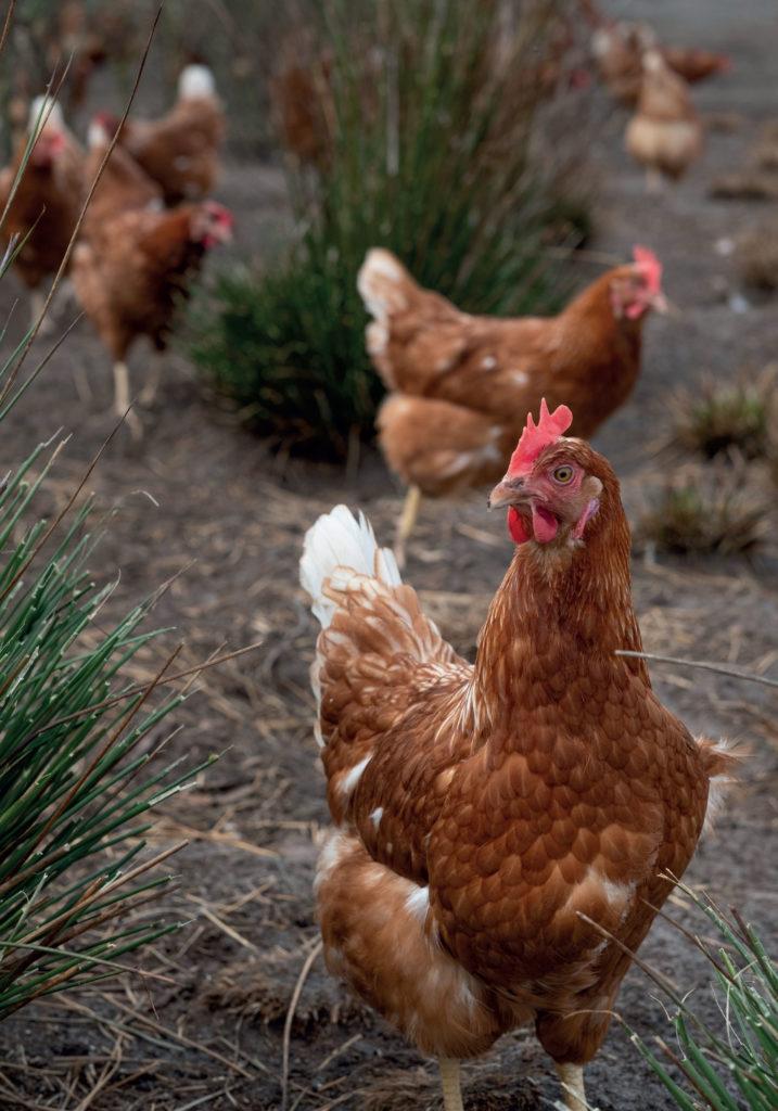 meyer-freiland-eier-kaufen-4
