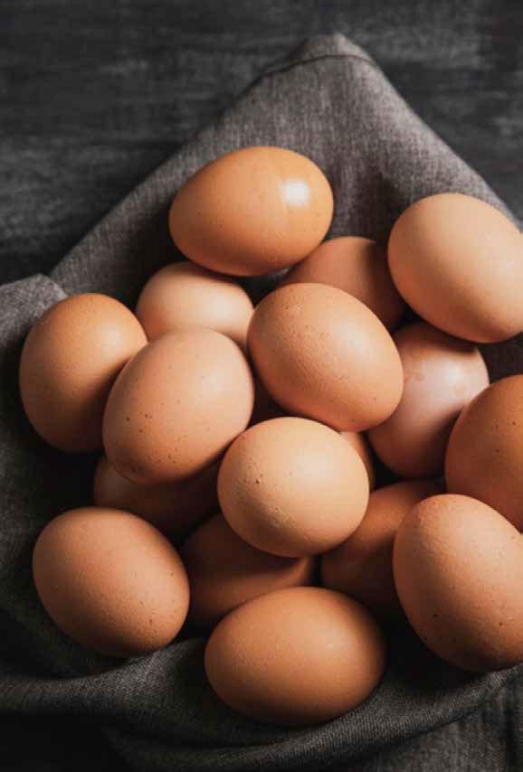 meyer-freilandeier-detail-eier